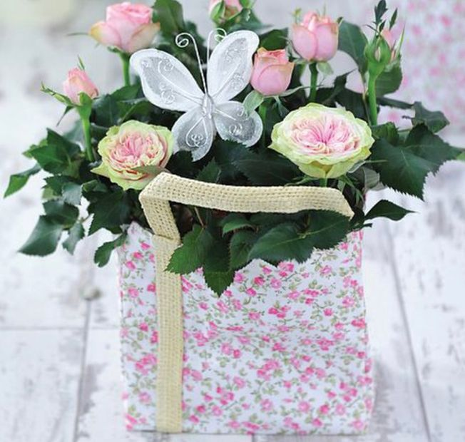 Mothers day Rose plant in a gift bag