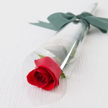 Single red rose in cellophane